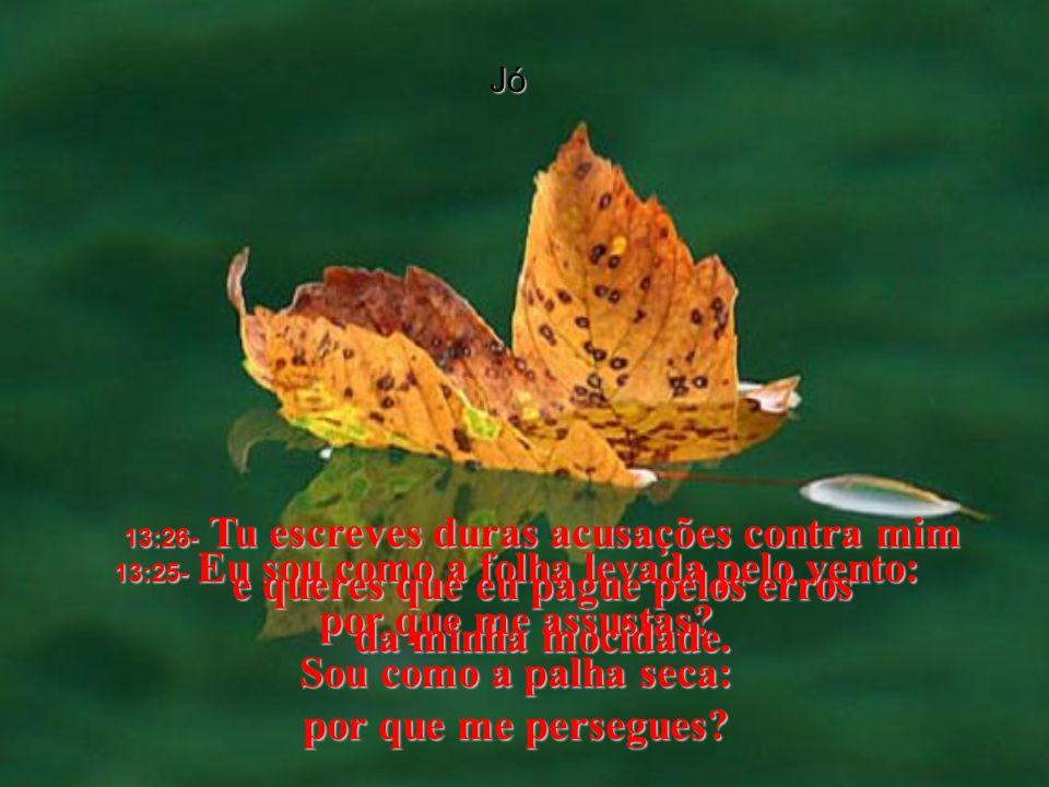 Jó 13:25- Eu sou como a folha levada pelo vento: por que me assustas.