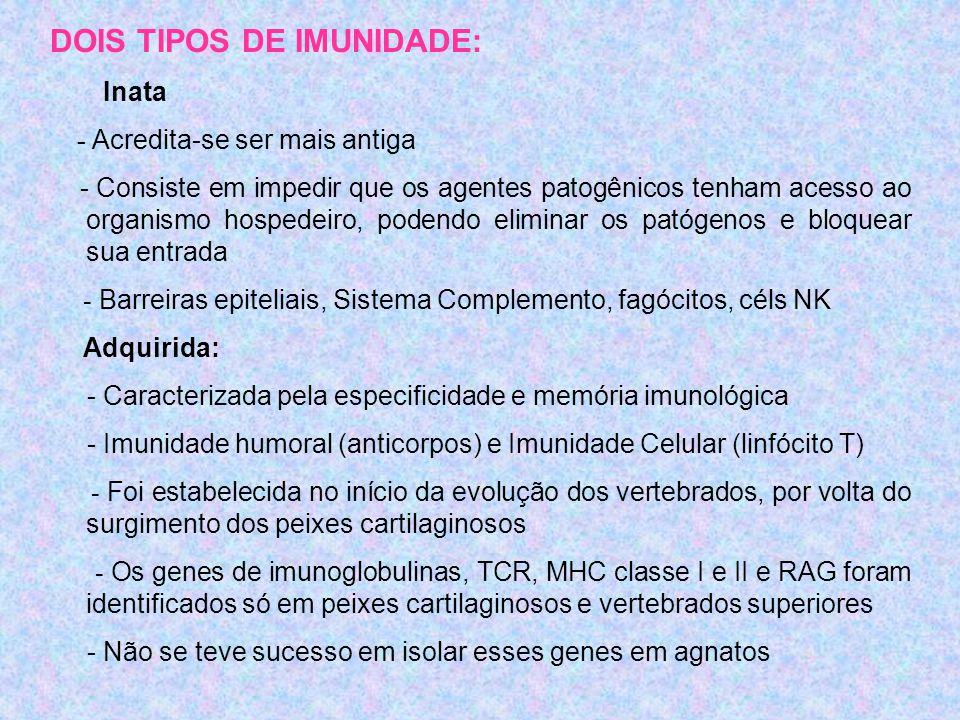 DOIS TIPOS DE IMUNIDADE: Inata - Acredita-se ser mais antiga - Consiste em impedir que os agentes patogênicos tenham acesso ao organismo hospedeiro, podendo eliminar os patógenos e bloquear sua entrada - Barreiras epiteliais, Sistema Complemento, fagócitos, céls NK Adquirida: - Caracterizada pela especificidade e memória imunológica - Imunidade humoral (anticorpos) e Imunidade Celular (linfócito T) - Foi estabelecida no início da evolução dos vertebrados, por volta do surgimento dos peixes cartilaginosos - Os genes de imunoglobulinas, TCR, MHC classe I e II e RAG foram identificados só em peixes cartilaginosos e vertebrados superiores - Não se teve sucesso em isolar esses genes em agnatos