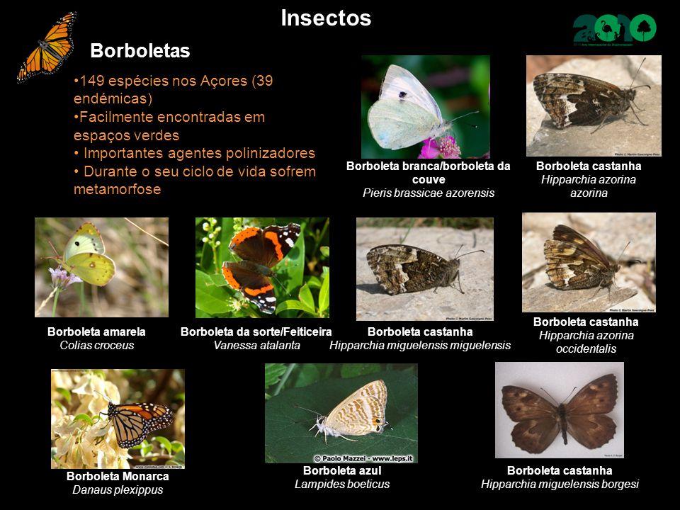 Borboletas 149 espécies nos Açores (39 endémicas) Facilmente encontradas em espaços verdes Importantes agentes polinizadores Durante o seu ciclo de vi