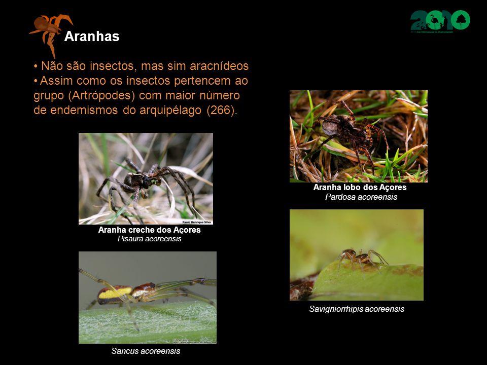 Aranhas Não são insectos, mas sim aracnídeos Assim como os insectos pertencem ao grupo (Artrópodes) com maior número de endemismos do arquipélago (266