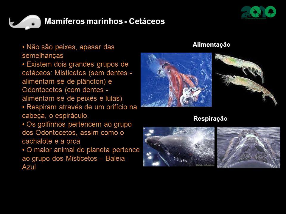 Não são peixes, apesar das semelhanças Existem dois grandes grupos de cetáceos: Misticetos (sem dentes - alimentam-se de plâncton) e Odontocetos (com dentes - alimentam-se de peixes e lulas) Respiram através de um orifício na cabeça, o espiráculo.