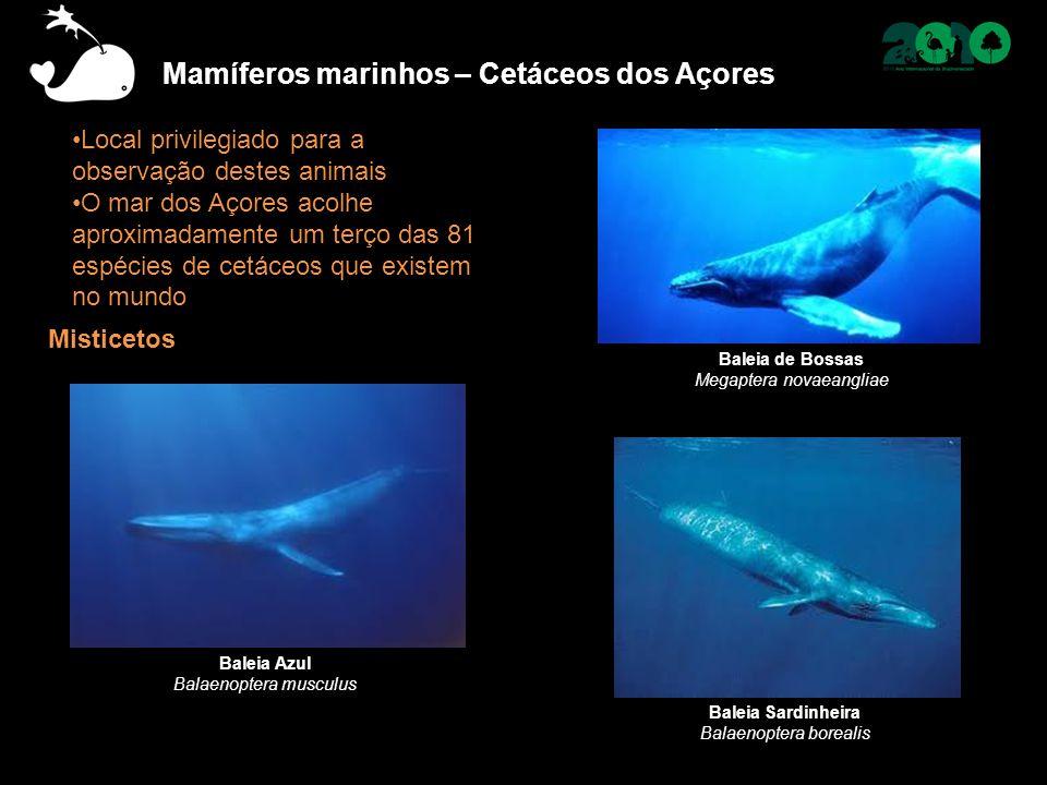 Local privilegiado para a observação destes animais O mar dos Açores acolhe aproximadamente um terço das 81 espécies de cetáceos que existem no mundo
