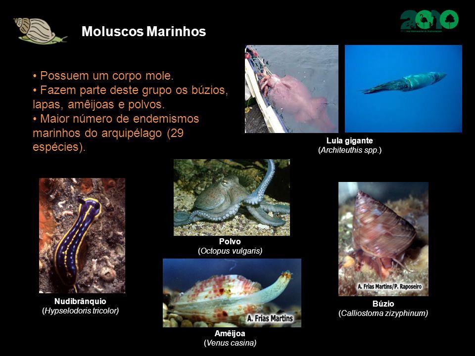 Moluscos Marinhos Possuem um corpo mole. Fazem parte deste grupo os búzios, lapas, amêijoas e polvos. Maior número de endemismos marinhos do arquipéla