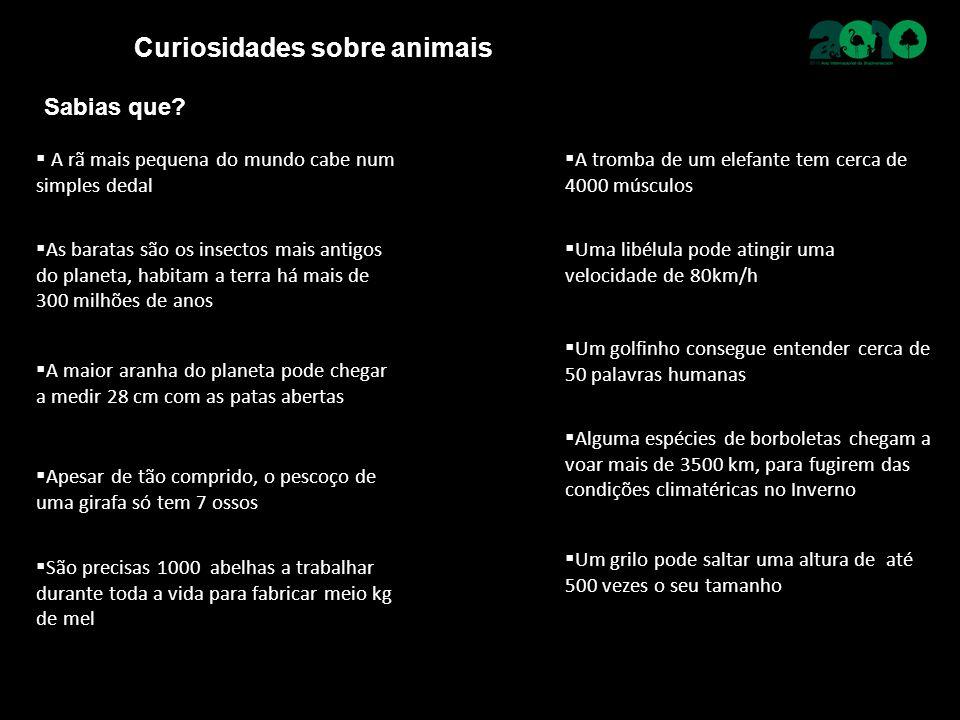 Curiosidades sobre animais  A rã mais pequena do mundo cabe num simples dedal Sabias que?  A tromba de um elefante tem cerca de 4000 músculos  As b