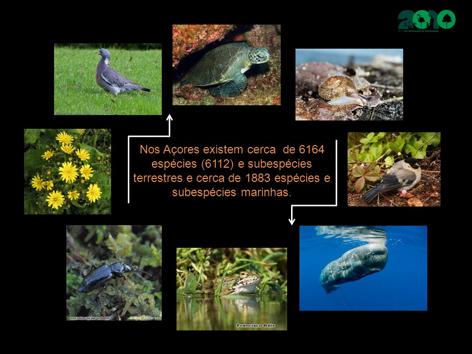 Peixes Peixes ósseos Grupo mais vasto e diversificado Cerca de 420 espécies nos Açores Mero (Epinephelus marginatus) Abrótea (Phycis phycis) Atum rabilo (Thunnus thynnus thynnus) Bicuda (Sphyraena viridensis) Peixe cão (Bodianus scrofa) Espadarte (Xiphias gladius) Tamboril (Lophius Piscatorius)