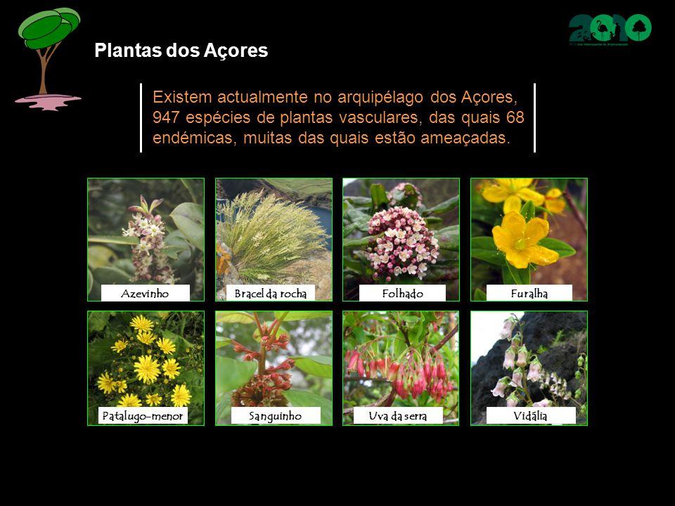 Plantas dos Açores Existem actualmente no arquipélago dos Açores, 947 espécies de plantas vasculares, das quais 68 endémicas, muitas das quais estão a