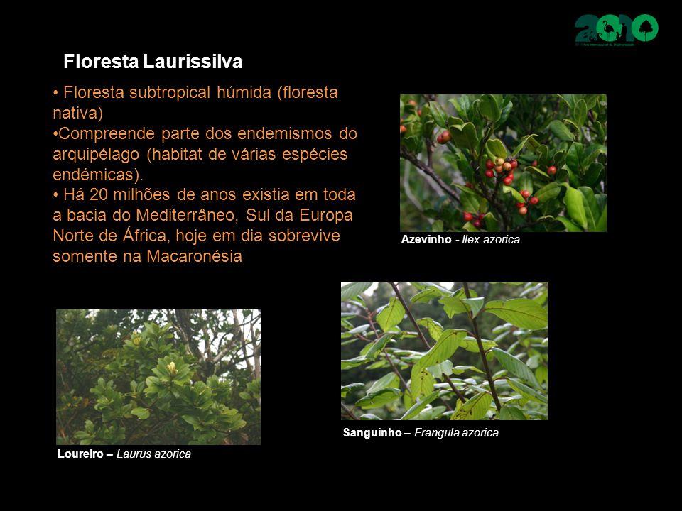 Floresta Laurissilva Floresta subtropical húmida (floresta nativa) Compreende parte dos endemismos do arquipélago (habitat de várias espécies endémicas).