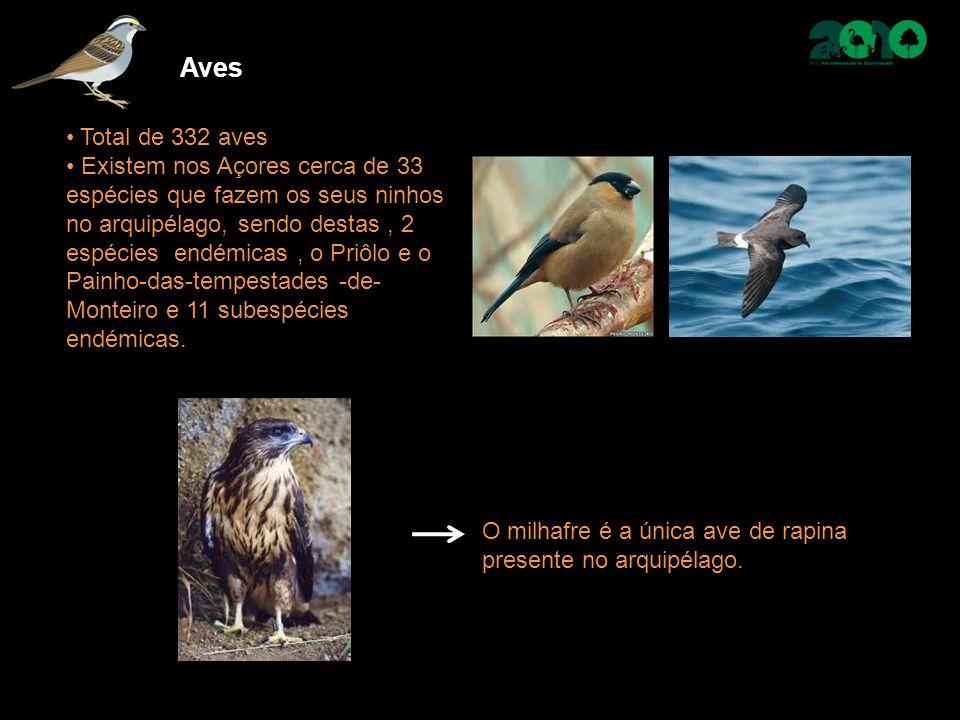Total de 332 aves Existem nos Açores cerca de 33 espécies que fazem os seus ninhos no arquipélago, sendo destas, 2 espécies endémicas, o Priôlo e o Painho-das-tempestades -de- Monteiro e 11 subespécies endémicas.