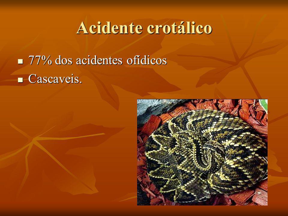 Acidente crotálico 77% dos acidentes ofídicos 77% dos acidentes ofídicos Cascaveis. Cascaveis.
