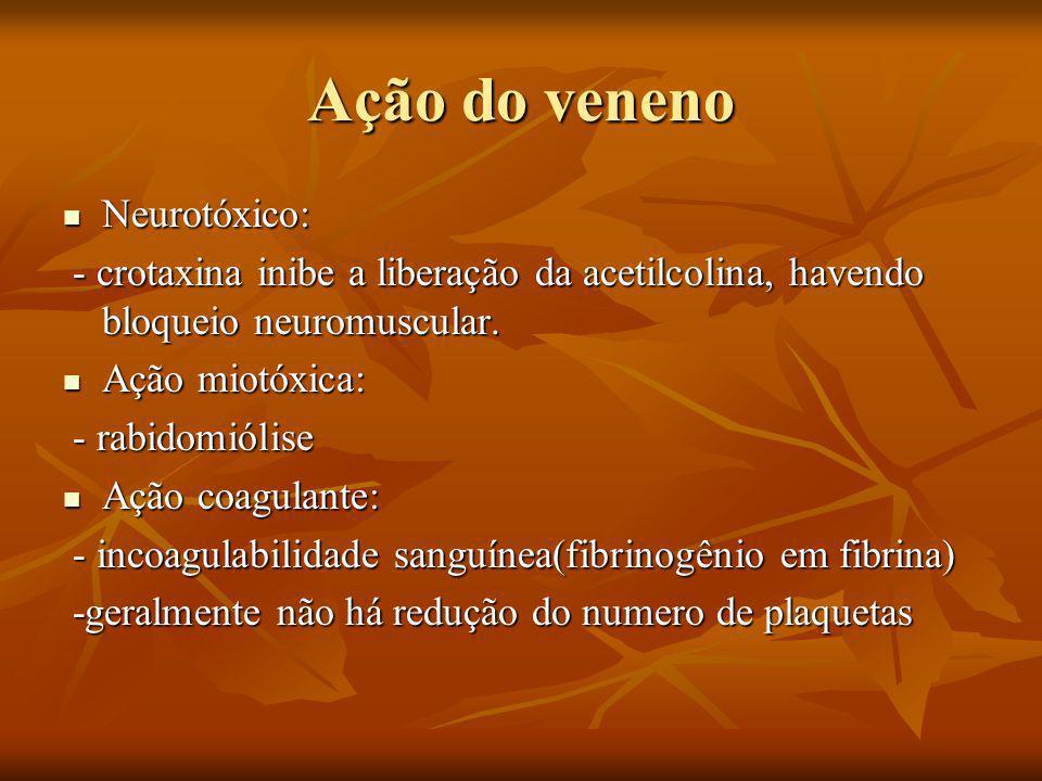Ação do veneno Neurotóxico: Neurotóxico: - crotaxina inibe a liberação da acetilcolina, havendo bloqueio neuromuscular.