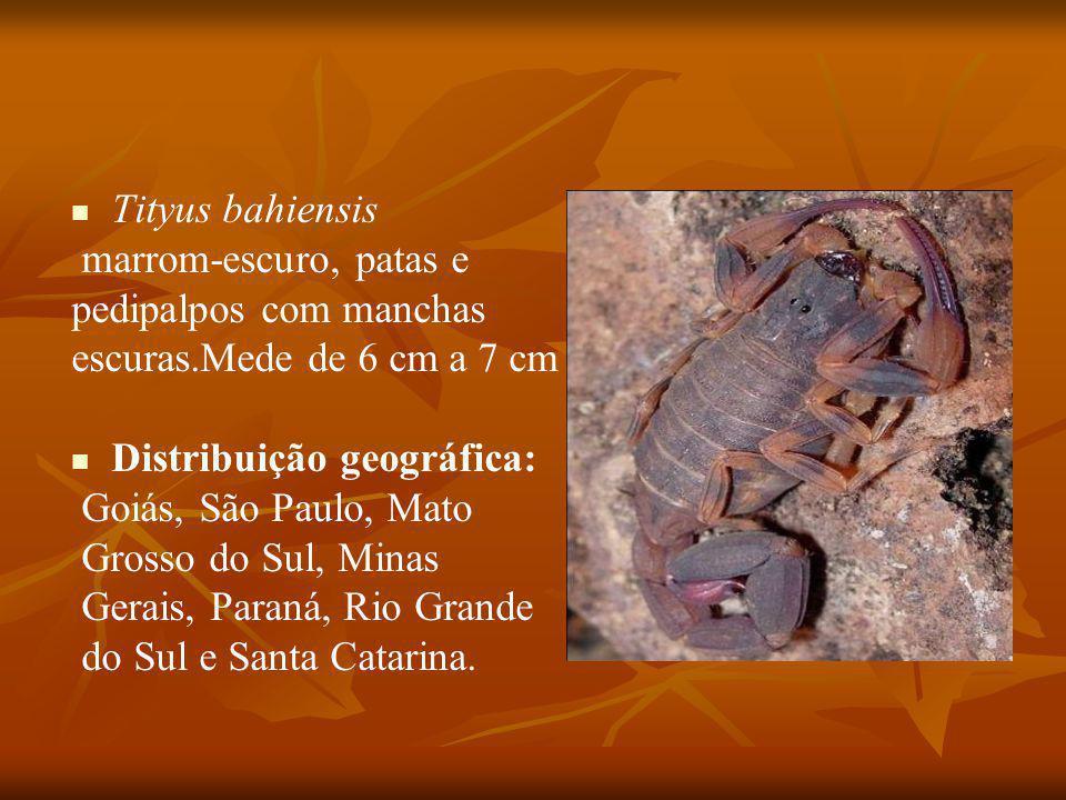 Tityus bahiensis marrom-escuro, patas e pedipalpos com manchas escuras.Mede de 6 cm a 7 cm Distribuição geográfica: Goiás, São Paulo, Mato Grosso do Sul, Minas Gerais, Paraná, Rio Grande do Sul e Santa Catarina.