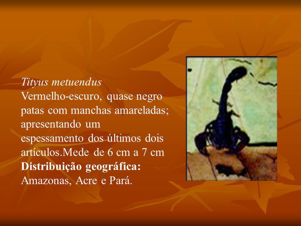 Tityus metuendus Vermelho-escuro, quase negro patas com manchas amareladas; apresentando um espessamento dos últimos dois artículos.Mede de 6 cm a 7 cm Distribuição geográfica: Amazonas, Acre e Pará.