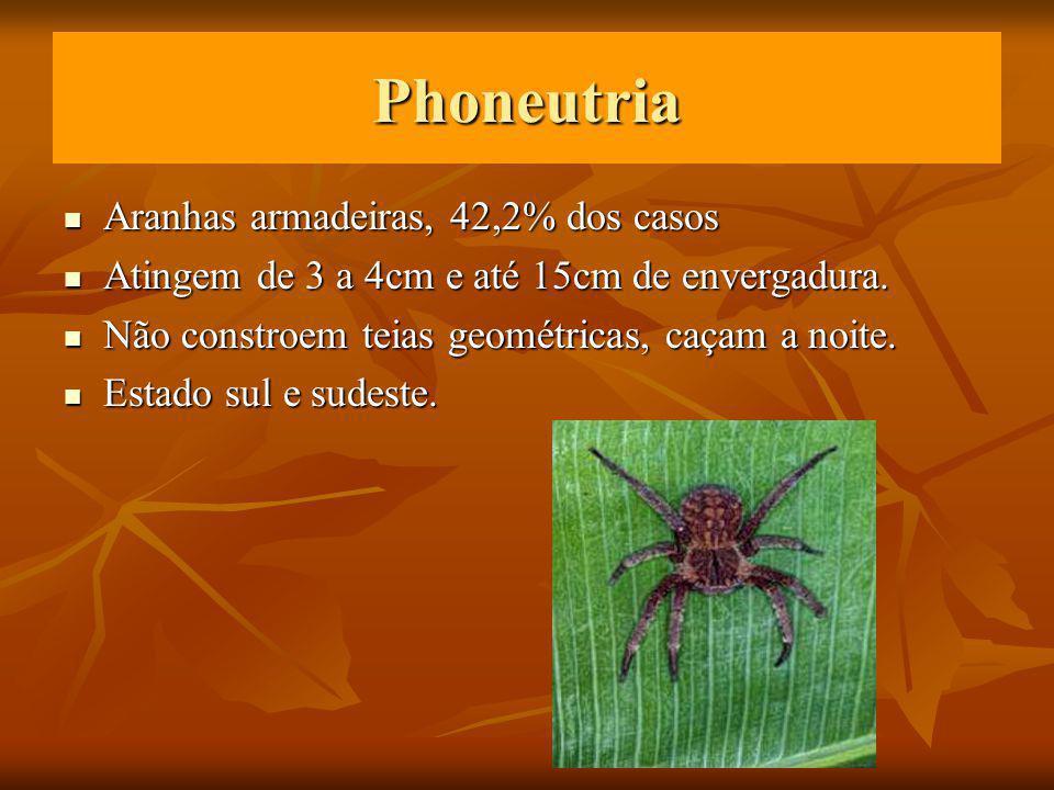 Phoneutria Aranhas armadeiras, 42,2% dos casos Aranhas armadeiras, 42,2% dos casos Atingem de 3 a 4cm e até 15cm de envergadura.