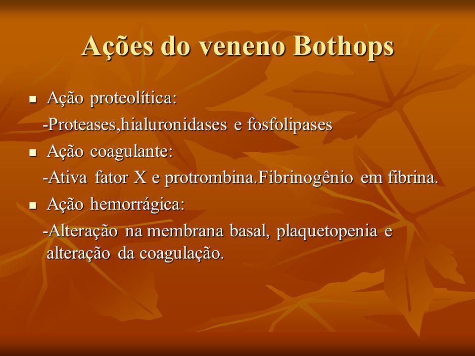 Ações do veneno Bothops Ação proteolítica: Ação proteolítica: -Proteases,hialuronidases e fosfolipases -Proteases,hialuronidases e fosfolipases Ação coagulante: Ação coagulante: -Ativa fator X e protrombina.Fibrinogênio em fibrina.