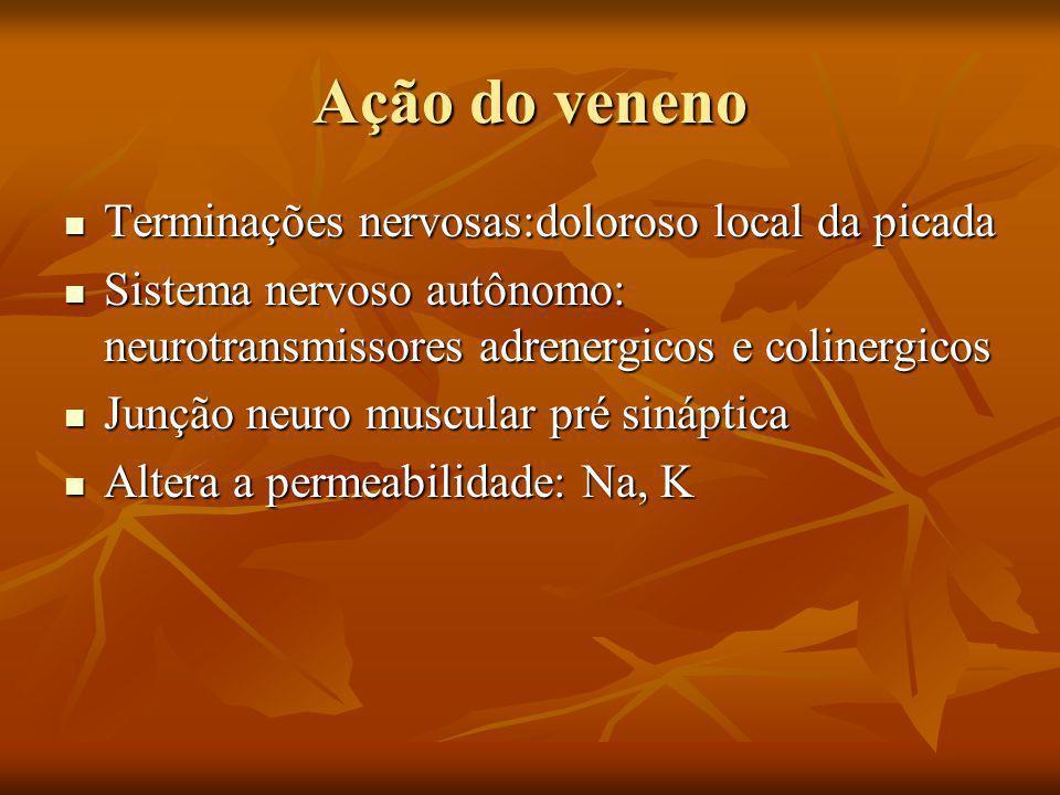 Ação do veneno Terminações nervosas:doloroso local da picada Terminações nervosas:doloroso local da picada Sistema nervoso autônomo: neurotransmissores adrenergicos e colinergicos Sistema nervoso autônomo: neurotransmissores adrenergicos e colinergicos Junção neuro muscular pré sináptica Junção neuro muscular pré sináptica Altera a permeabilidade: Na, K Altera a permeabilidade: Na, K