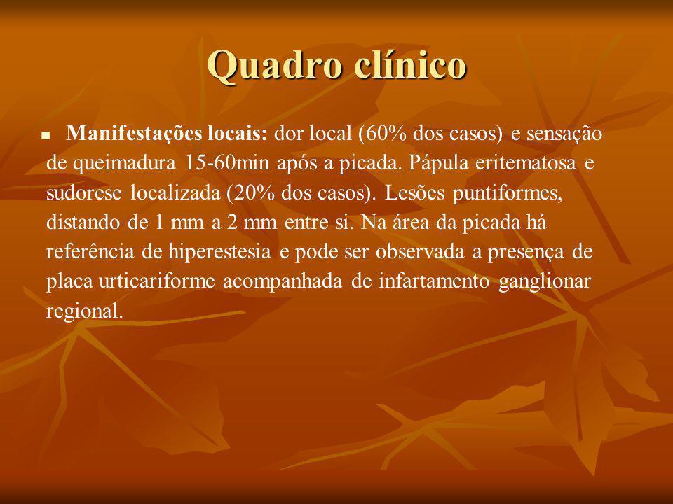 Quadro clínico Manifestações locais: dor local (60% dos casos) e sensação de queimadura 15-60min após a picada.