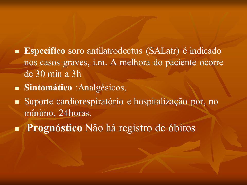 Específico soro antilatrodectus (SALatr) é indicado nos casos graves, i.m.