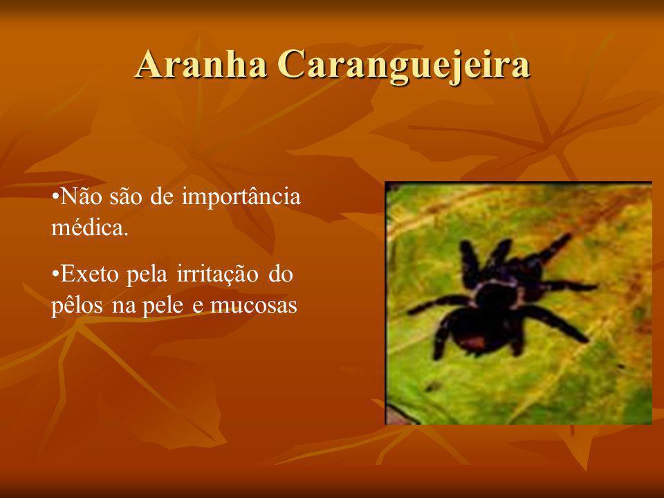 Aranha Caranguejeira Não são de importância médica. Exeto pela irritação do pêlos na pele e mucosas