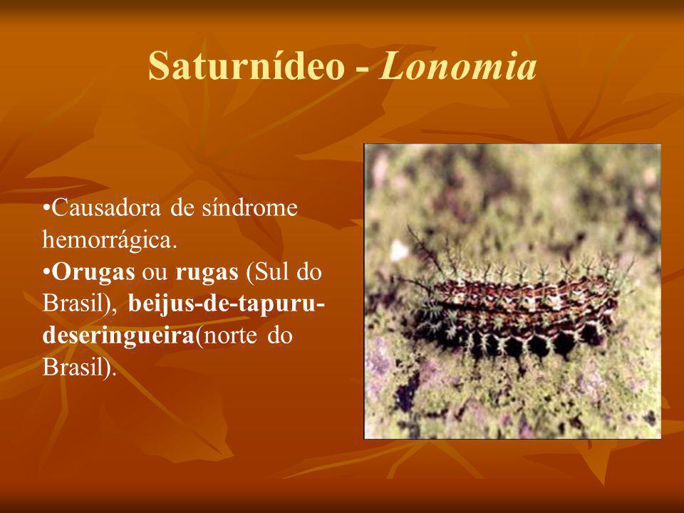 Saturnídeo - Lonomia Causadora de síndrome hemorrágica.
