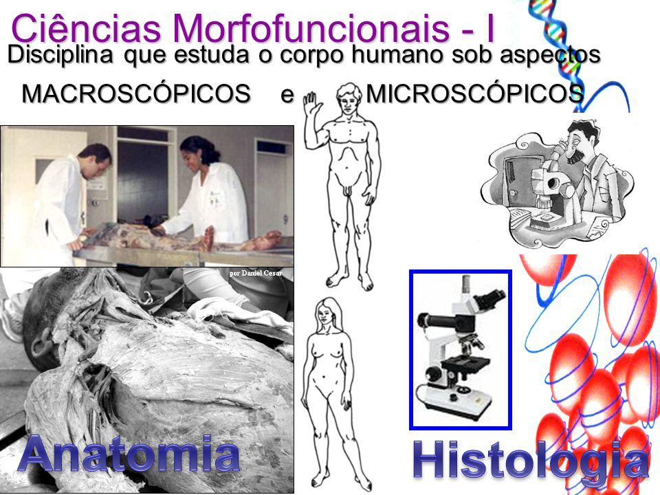 Ciências Morfofuncionais - I Disciplina que estuda o corpo humano sob aspectos MACROSCÓPICOS e MICROSCÓPICOS MACROSCÓPICOS e MICROSCÓPICOS