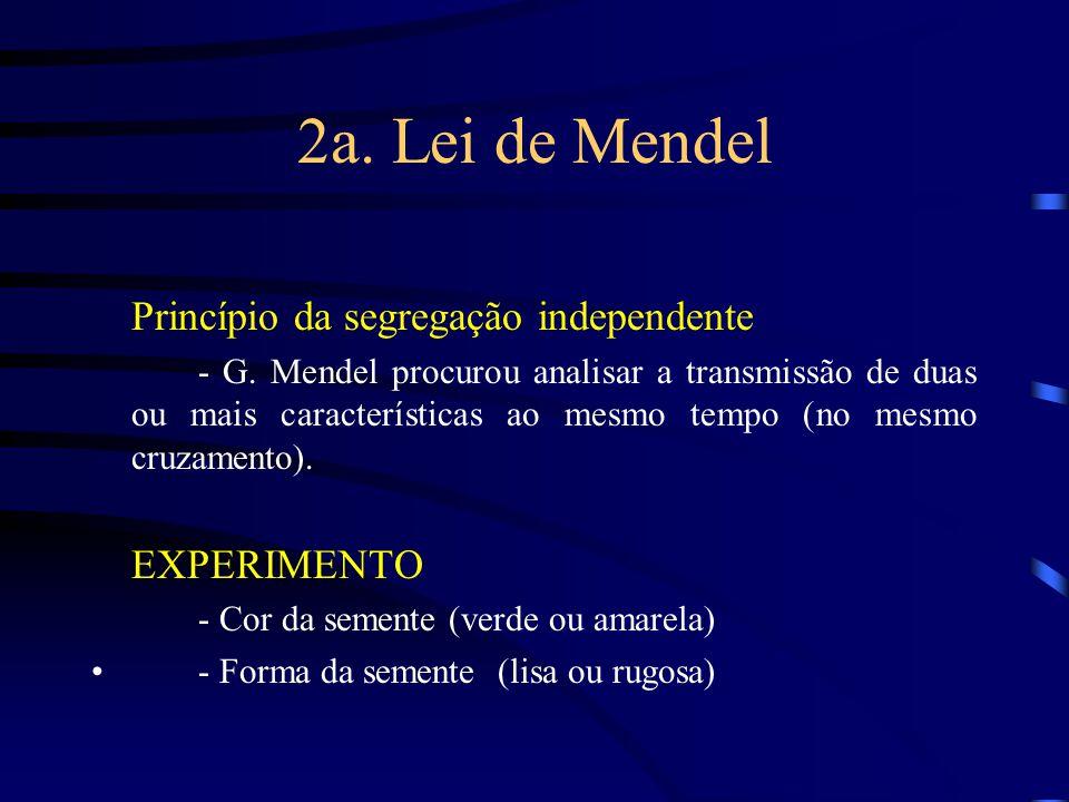 2a. Lei de Mendel Princípio da segregação independente - G. Mendel procurou analisar a transmissão de duas ou mais características ao mesmo tempo (no