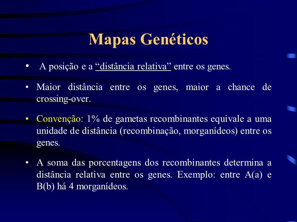 """Mapas Genéticos A posição e a """"distância relativa"""" entre os genes. Maior distância entre os genes, maior a chance de crossing-over. Convenção: 1% de g"""