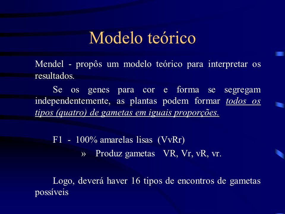 Modelo teórico Mendel - propôs um modelo teórico para interpretar os resultados. Se os genes para cor e forma se segregam independentemente, as planta