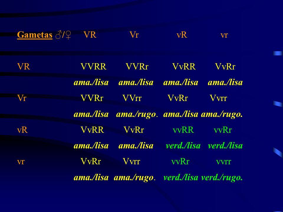Gametas Gametas ♂/♀ VR Vr vR vr VR VVRR VVRr VvRR VvRr ama./lisa ama./lisa Vr VVRr VVrr VvRr Vvrr ama./lisa ama./rugo. vR VvRR VvRr vvRR vvRr ama./lis
