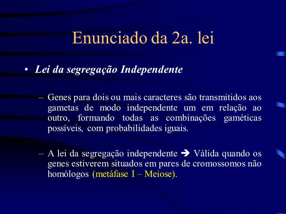 Enunciado da 2a. lei Lei da segregação Independente –Genes para dois ou mais caracteres são transmitidos aos gametas de modo independente um em relaçã