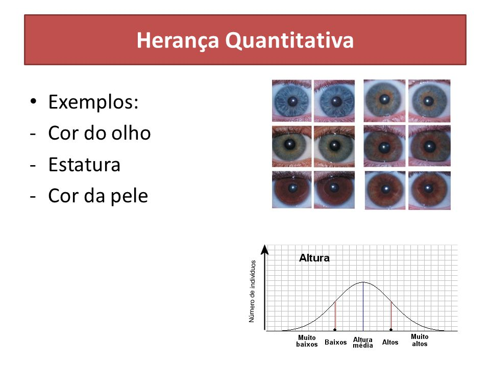 Exemplos: -Cor do olho -Estatura -Cor da pele Herança Quantitativa