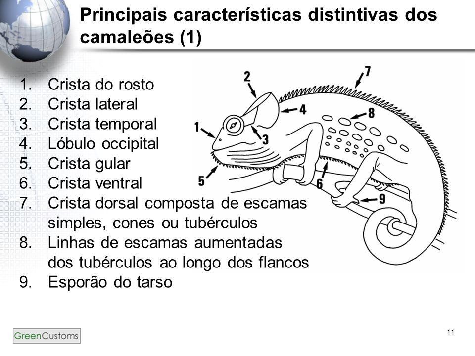 11 Principais características distintivas dos camaleões (1) 1.Crista do rosto 2.Crista lateral 3.Crista temporal 4.Lóbulo occipital 5.Crista gular 6.Crista ventral 7.Crista dorsal composta de escamas simples, cones ou tubérculos 8.Linhas de escamas aumentadas dos tubérculos ao longo dos flancos 9.Esporão do tarso