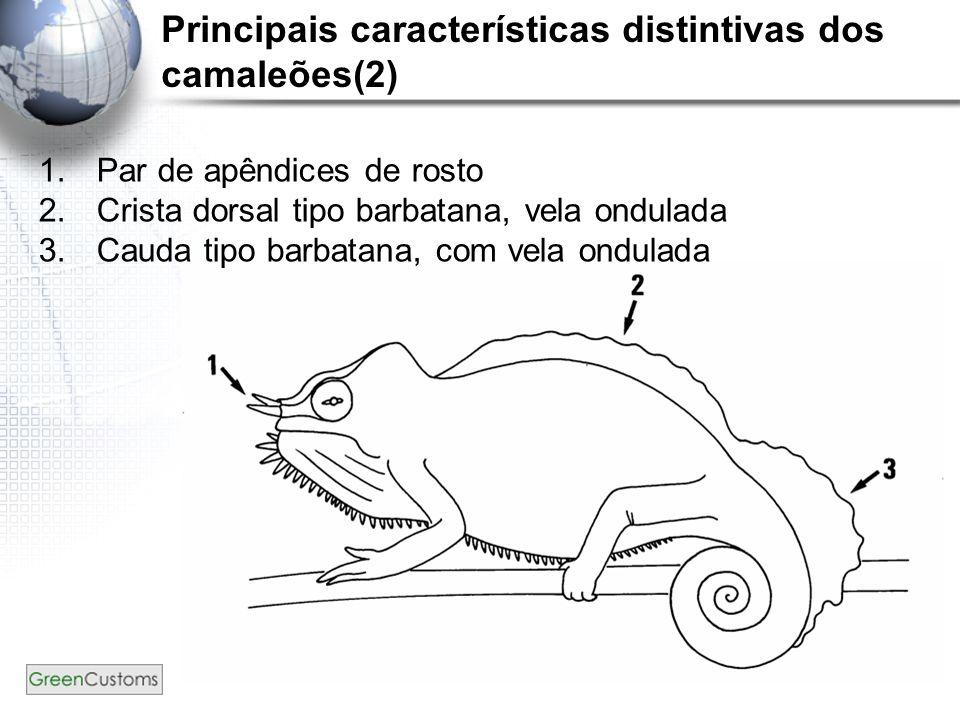 12 Principais características distintivas dos camaleões(2) 1.Par de apêndices de rosto 2.Crista dorsal tipo barbatana, vela ondulada 3.Cauda tipo barb