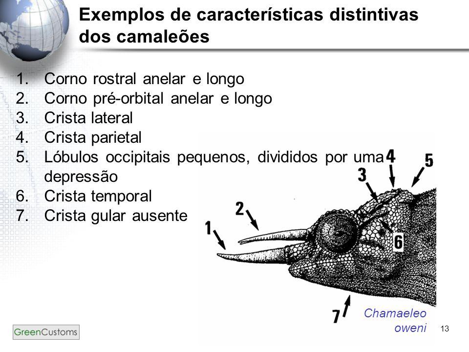 13 Exemplos de características distintivas dos camaleões 1.Corno rostral anelar e longo 2.Corno pré-orbital anelar e longo 3.Crista lateral 4.Crista p