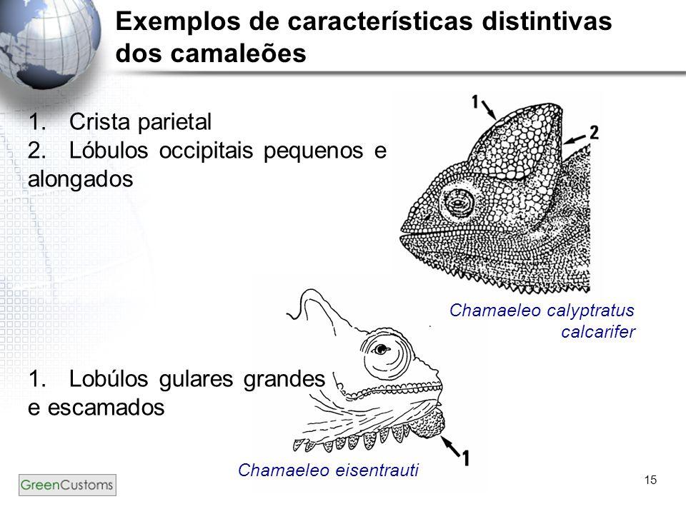15 Exemplos de características distintivas dos camaleões 1.Crista parietal 2.Lóbulos occipitais pequenos e alongados 1.Lobúlos gulares grandes e escam