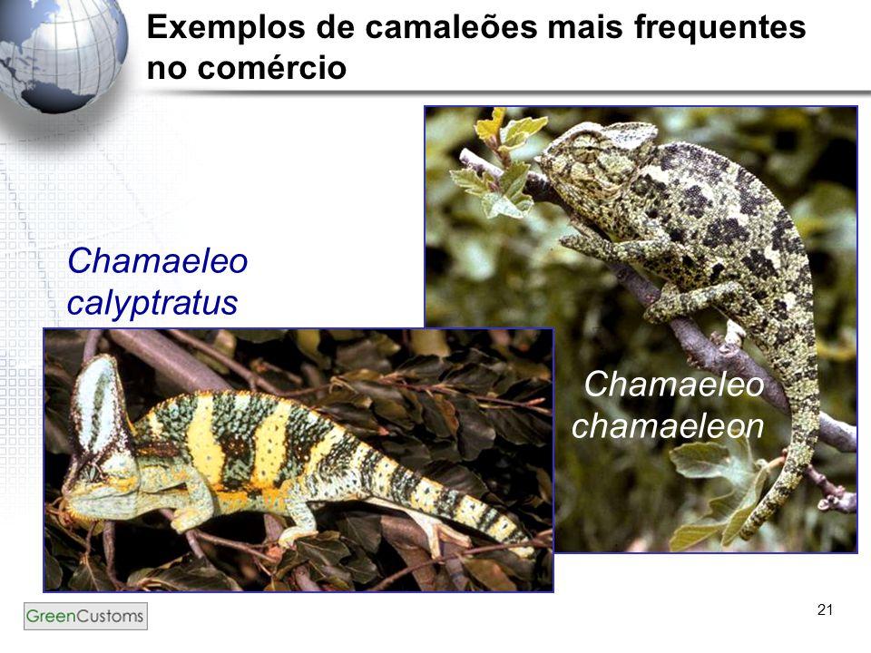 21 Chamaeleo calyptratus (macho) Chamaeleo chamaeleon Exemplos de camaleões mais frequentes no comércio