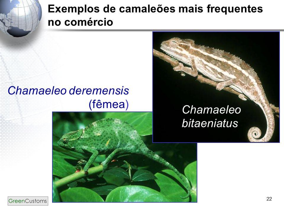 22 Chamaeleo bitaeniatus Chamaeleo deremensis (fêmea) Exemplos de camaleões mais frequentes no comércio