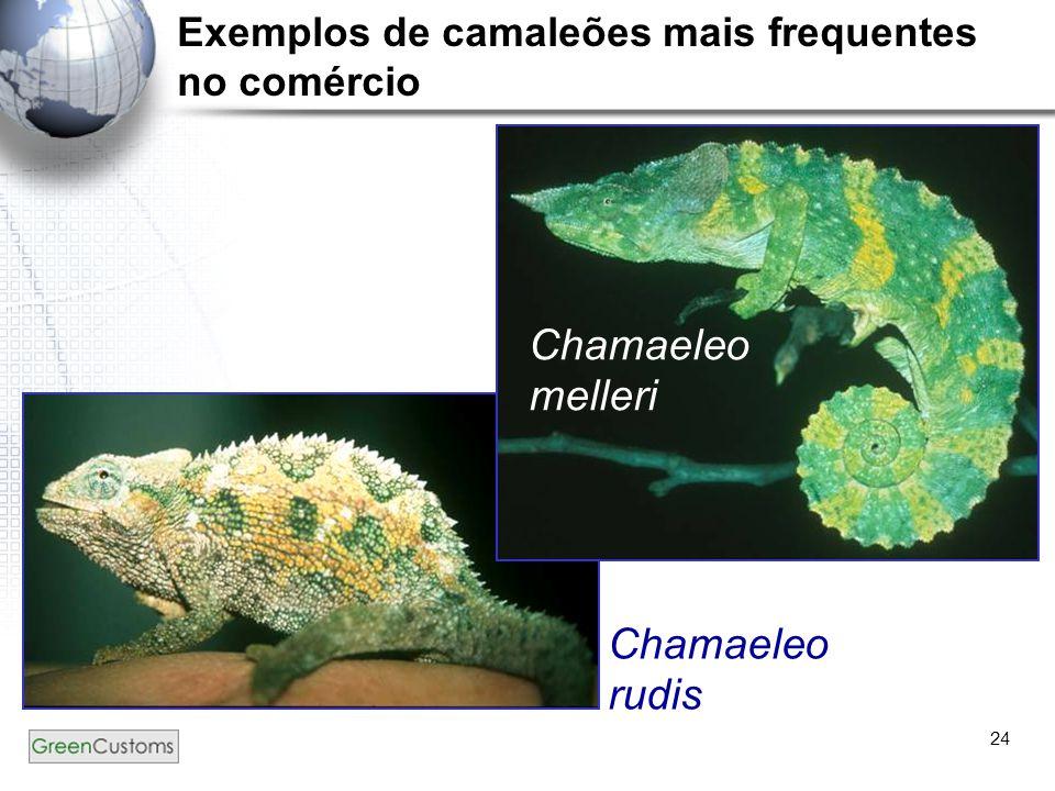 24 Chamaeleo melleri Chamaeleo rudis Exemplos de camaleões mais frequentes no comércio