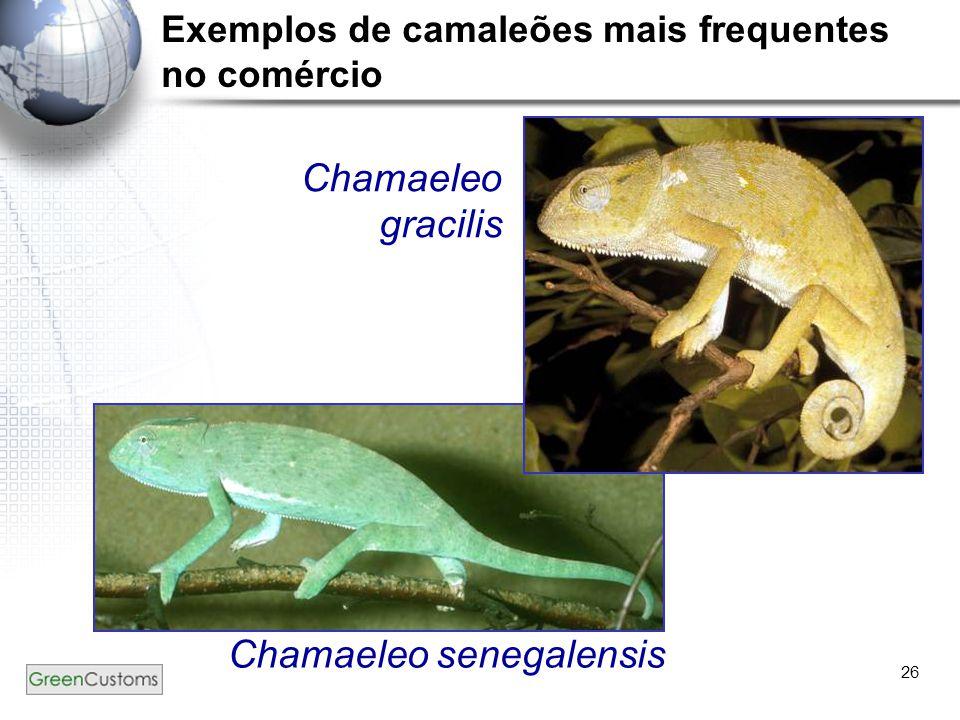 26 Chamaeleo gracilis Chamaeleo senegalensis Exemplos de camaleões mais frequentes no comércio