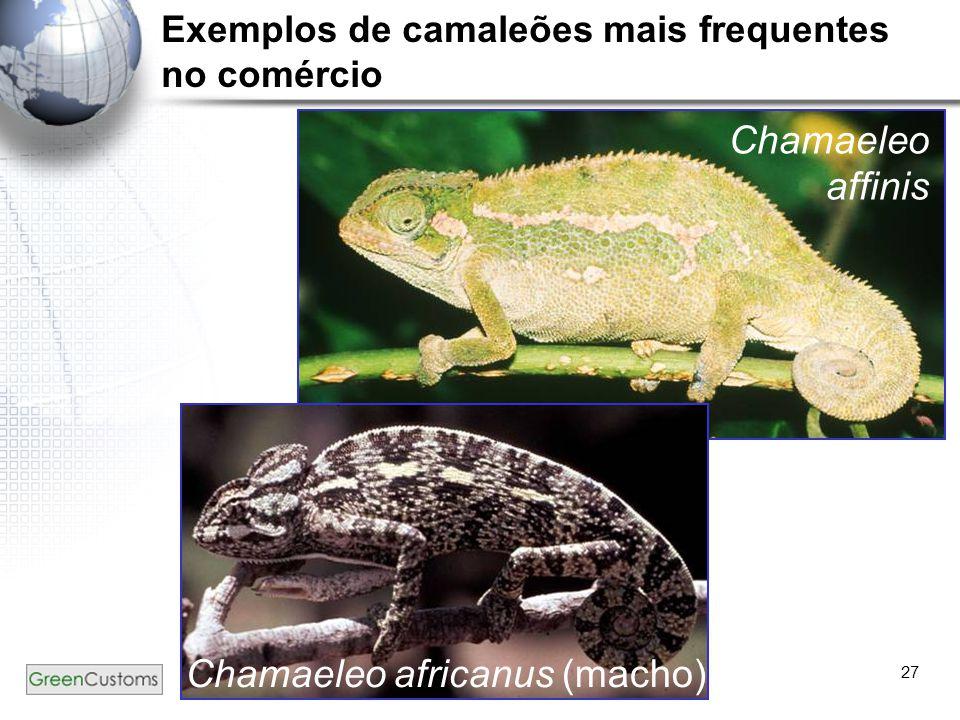 27 Chamaeleo affinis Chamaeleo africanus (macho) Exemplos de camaleões mais frequentes no comércio