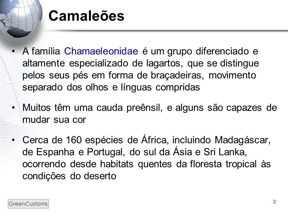 3 Camaleões A família Chamaeleonidae é um grupo diferenciado e altamente especializado de lagartos, que se distingue pelos seus pés em forma de braçad