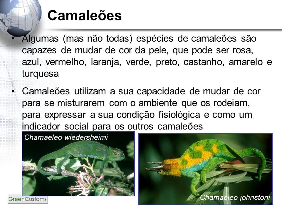 4 Camaleões Algumas (mas não todas) espécies de camaleões são capazes de mudar de cor da pele, que pode ser rosa, azul, vermelho, laranja, verde, pret