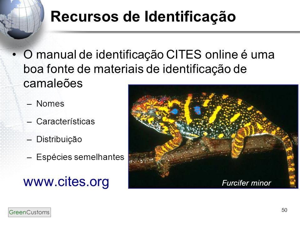 50 Recursos de Identificação O manual de identificação CITES online é uma boa fonte de materiais de identificação de camaleões –Nomes –Características