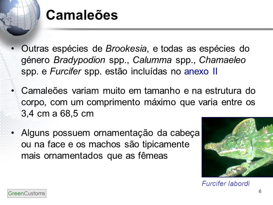 6 Camaleões Outras espécies de Brookesia, e todas as espécies do género Bradypodion spp., Calumma spp., Chamaeleo spp. e Furcifer spp. estão incluídas