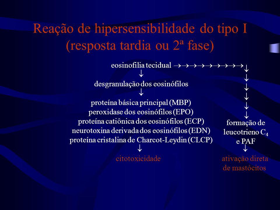 eosinofilia tecidual  desgranulação dos eosinófilos  proteína básica principal (MBP) peroxidase dos eosinófilos (EPO) proteína catiônica dos eosinóf