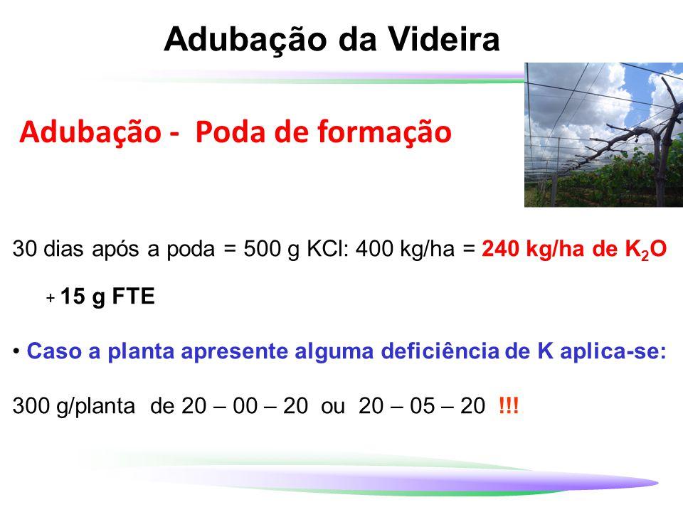 Adubação da Videira 30 dias após a poda = 500 g KCl: 400 kg/ha = 240 kg/ha de K 2 O + 15 g FTE Caso a planta apresente alguma deficiência de K aplica-