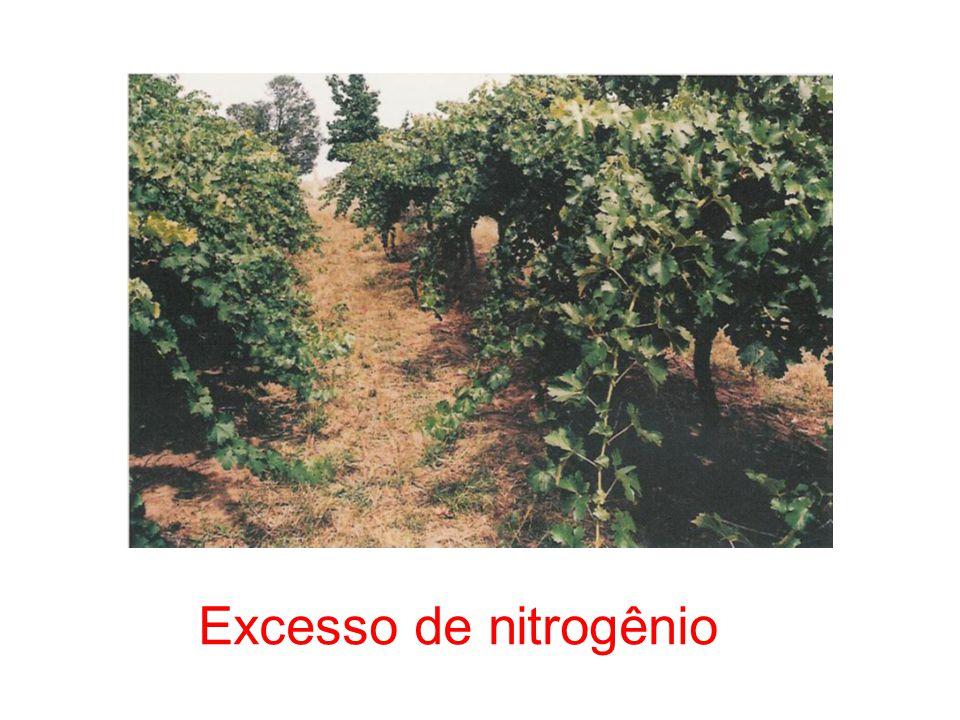 Excesso de nitrogênio