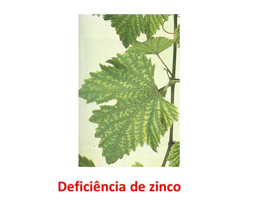 Deficiência de zinco