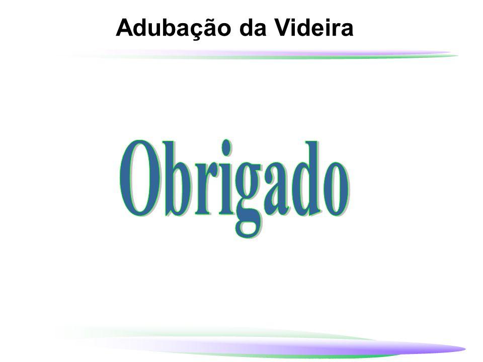 Adubação da Videira