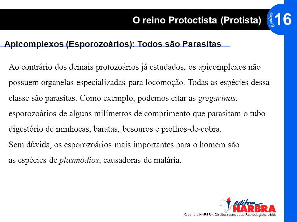 © editora HARBRA. Direitos reservados. Reprodução proibida. 16 O reino Protoctista (Protista) Apicomplexos (Esporozoários): Todos são Parasitas Ao con