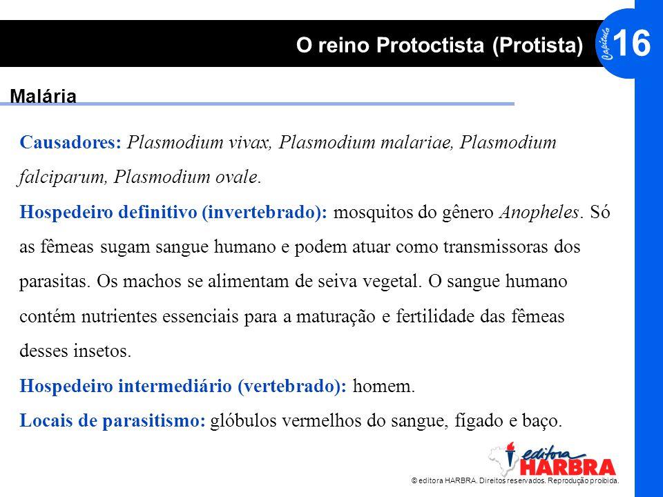 © editora HARBRA. Direitos reservados. Reprodução proibida. 16 O reino Protoctista (Protista) Malária Causadores: Plasmodium vivax, Plasmodium malaria